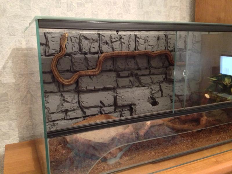 Террариум своими руками для змей 21