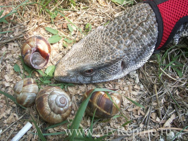 Ядовитые змеи краснодарского края