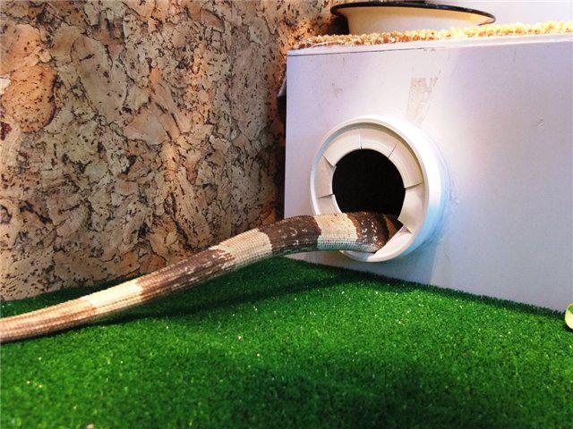 Гнездо для игуаны своими руками